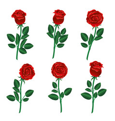 Set of red roses vector