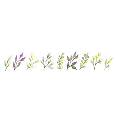 watercolor leaves and branches berry tiny flora vector image