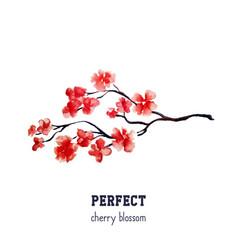 realistic red sakura blossom - japanese red cherry vector image