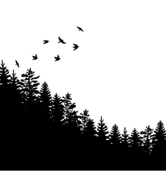 fir trees and pines vector image