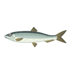 Atlantic herring lupea harengus fish vector