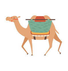 Camel with bridle and saddle two humped desert vector