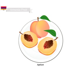 Fresh apricot a popular fruit in armenia vector