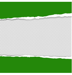 green ripped paper vector image