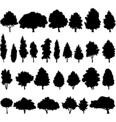 set of different deciduous trees vector image vector image