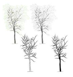 tree birch vector image