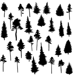 set of conifer trees vector image