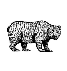 Grizzly bear brown wild animal side view hand vector