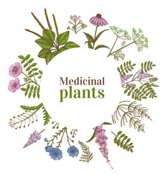 colored round template with medicinal plants in vector image