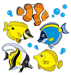 Coral fish collection vector
