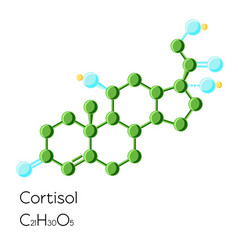 cortisol hormone structural chemical formula vector image