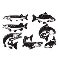 set carp pike fish isolated on white vector image
