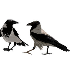 two dark ravens vector image