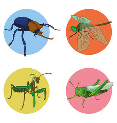 insects in vector image vector image