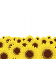 summer meadow sunflowers background vector image