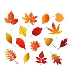 Autumnal red yellow and brown leaves vector image