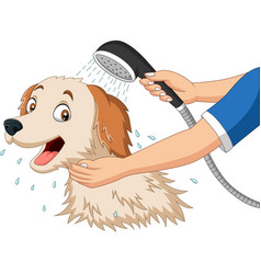 cartoon dog bathing with shower vector image
