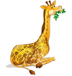 Cute giraffe chewing on leaves vector image
