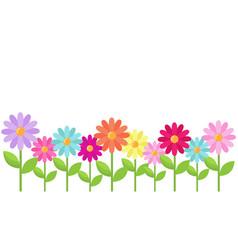 daisy color border vector image