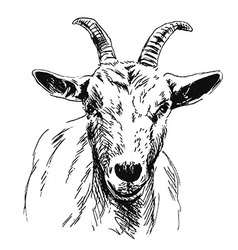 Hand sketch of goat head vector