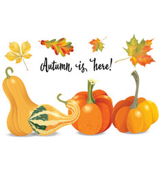 Set of autumn objects pumpkins different types vector