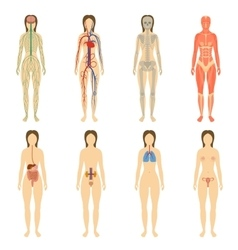 Set of human organs and systems of the body vector