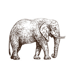 sketch of walking african elephant vintage hand vector image