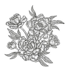 hand drawn spring peony flowers and leaves vector image vector image