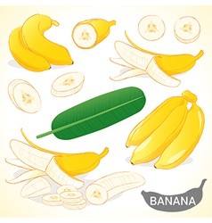 Set of banana with leaf in various styles vector image