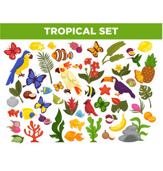 tropical and exotic fruits birds fishes and vector image vector image