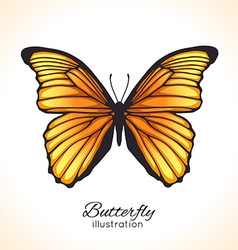 Bright hand drawn butterfly vector image