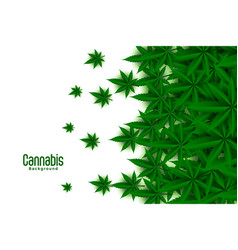 green cannabis leaves on white background design vector image