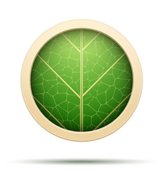 leaves round icon vector image