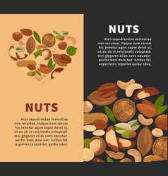 nuts kernels nutrition nut food snacks flat vector image