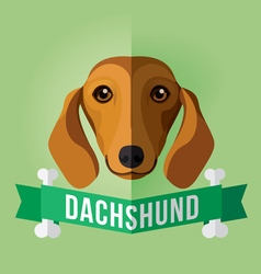 dachshund vector image vector image