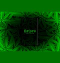 Cannabis or marijuana green leaves background vector
