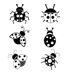 Ladybugs vector
