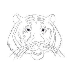 portrait of tiger lines vector image