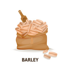 bag of barley culture wooden spoon agricultural vector image