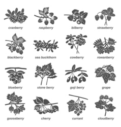 Berries Monochrome Icons Set vector