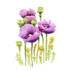 closeup of watercolor hand drawn summer flowers vector image