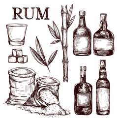 Composition alcoholic beverage rum vector