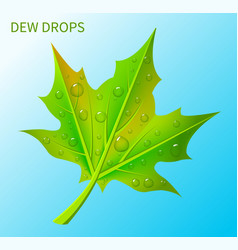 dew drops on green leaf vector image