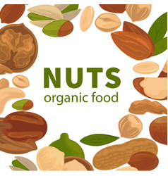 Nuts organic raw food poster for nut farm vector