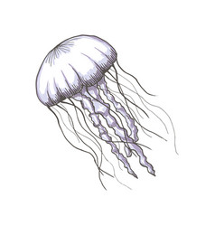 hand drawn sketch isolated jellyfish marine vector image