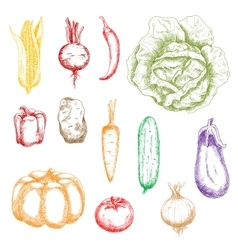 Autumnal ripe vegetables sketch icons vector