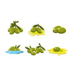 fresh green olives set healthy organic product vector image