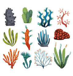 set watercolor seaweed and corals isolated vector image