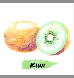 watercolor kiwi set hand drawing isolated vector image