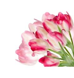 Fresh spring tulip flowers on white EPS 10 vector image